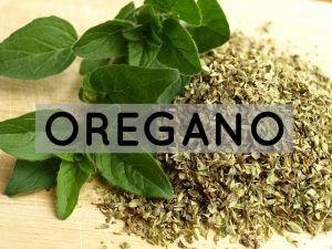 benefits offered by oregano